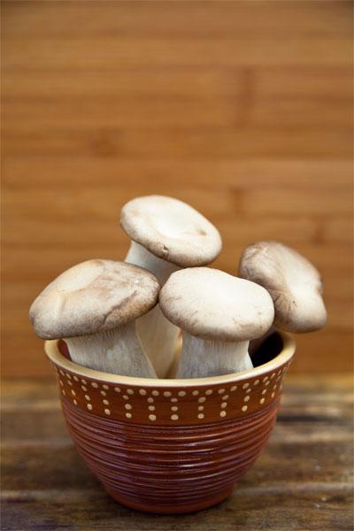Kräuterseitlinge Pilze veganmom