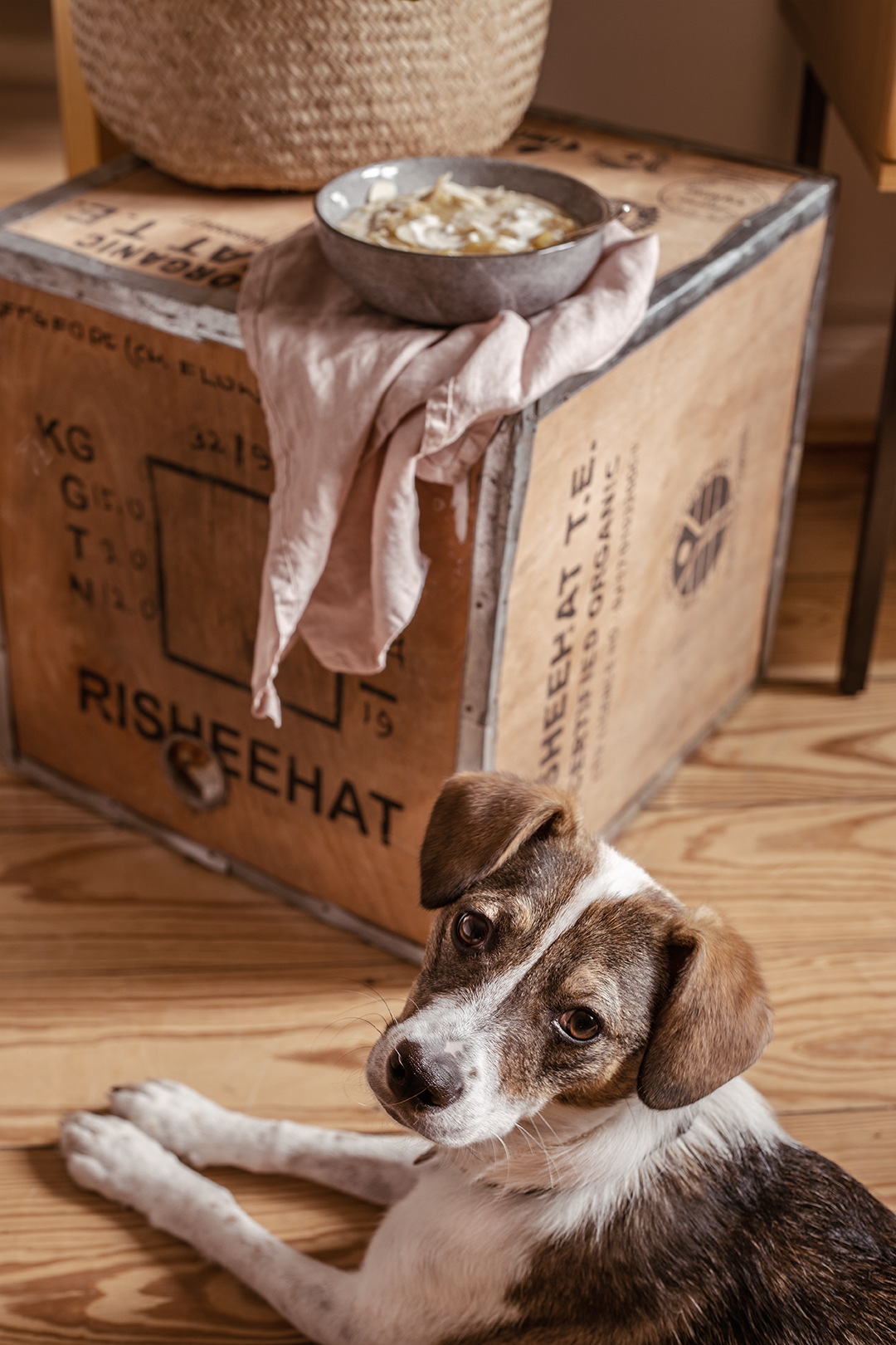 Vegan Dog Pippa